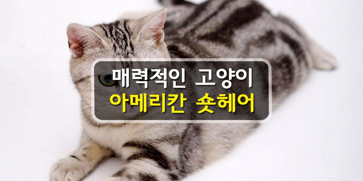 푸하하TV 브랜드 영상154