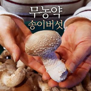 무농약 고급 송이버섯